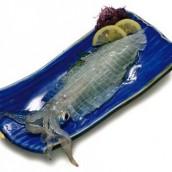 Yobuko Squid